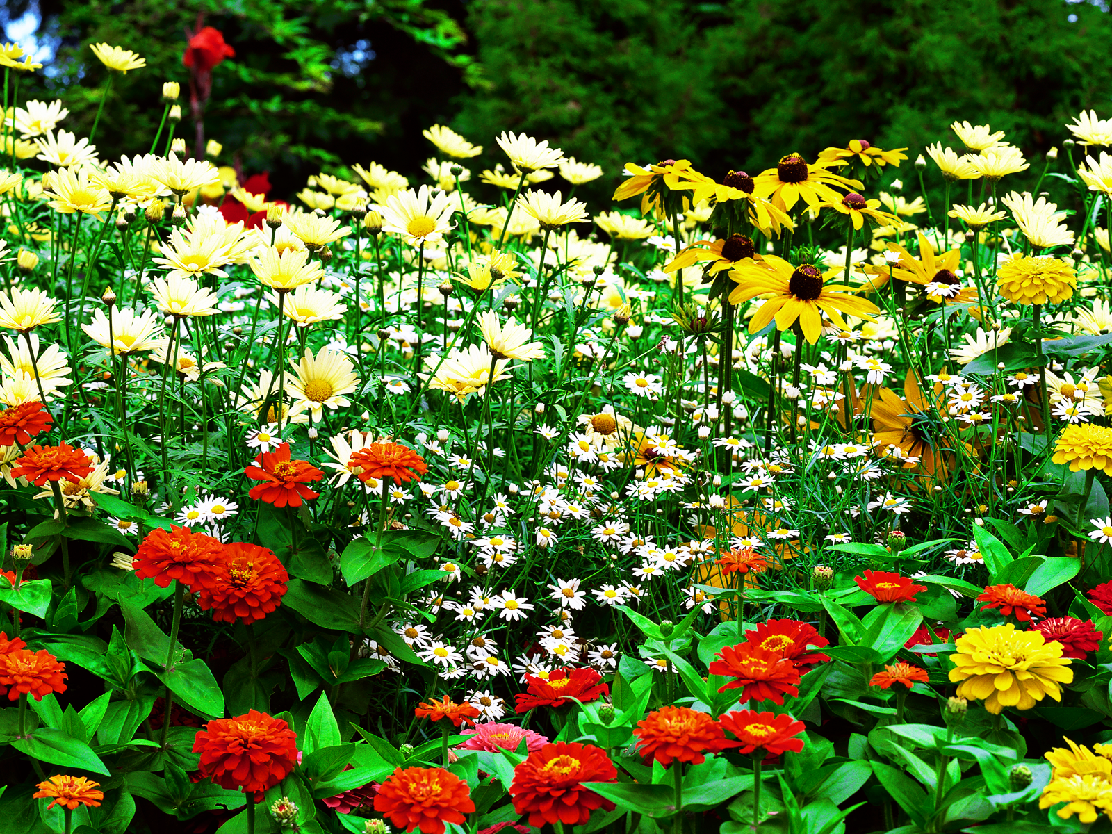 Wallpapers Dekstop 4 U: Flower Garden Wallpaper