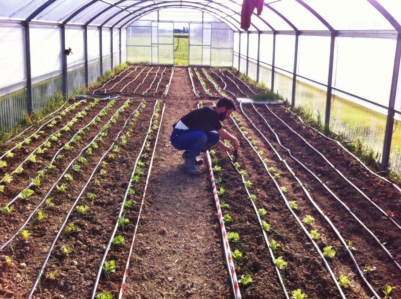 La nostra serra inizia a popolarsi la semente for Irrigazione serra