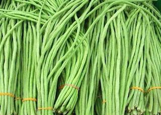 cara budidaya kacang panjang dalam polybag,budidaya kacang panjang secara organik,cara budidaya kacang panjang yang benar,cara budidaya kacang panjang yang baik,