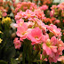 Harga Sewa Bunga