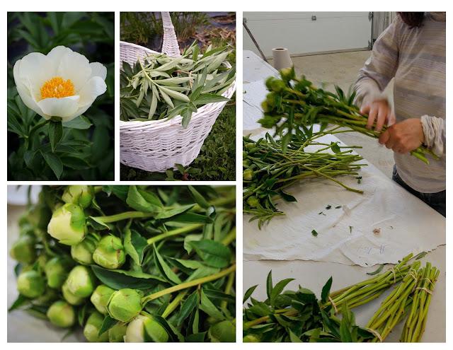 mano-capano,fermecapano,fleurscoupées,emmanuellericardblog,fleurscultivées,photoemmanuellericard