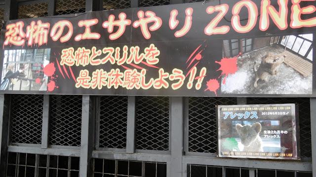 北海道 札幌 ノースサファリサッポロ ライオン