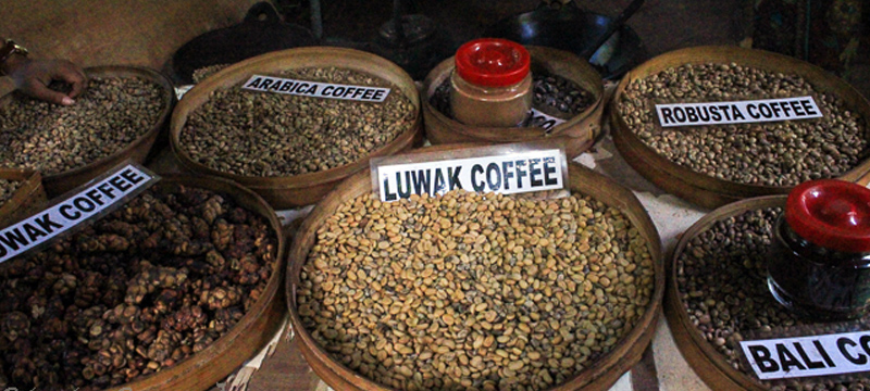 Visit Luwak Coffee Plantation in Bali Pulina   Bali Hai ...  Kopi Luwak Coffee Plantations