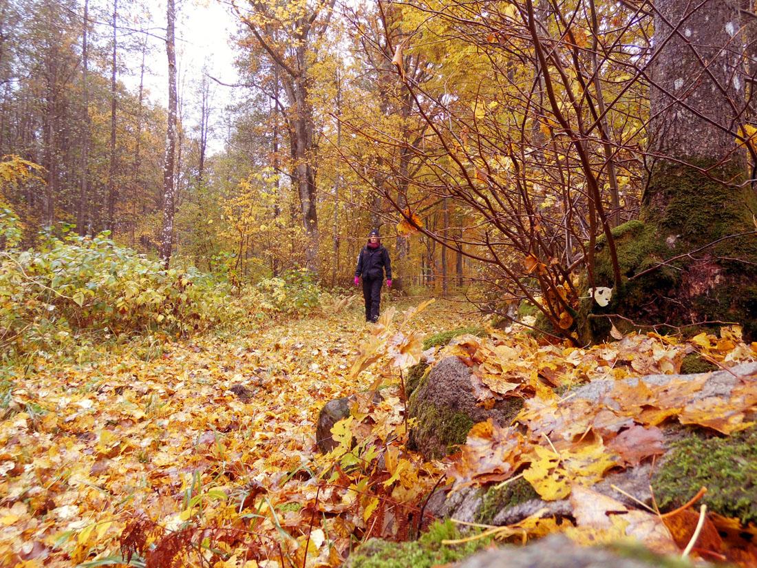 In bosco, 24 ottobre 2016