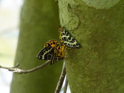 むろいけ園地 蝶々