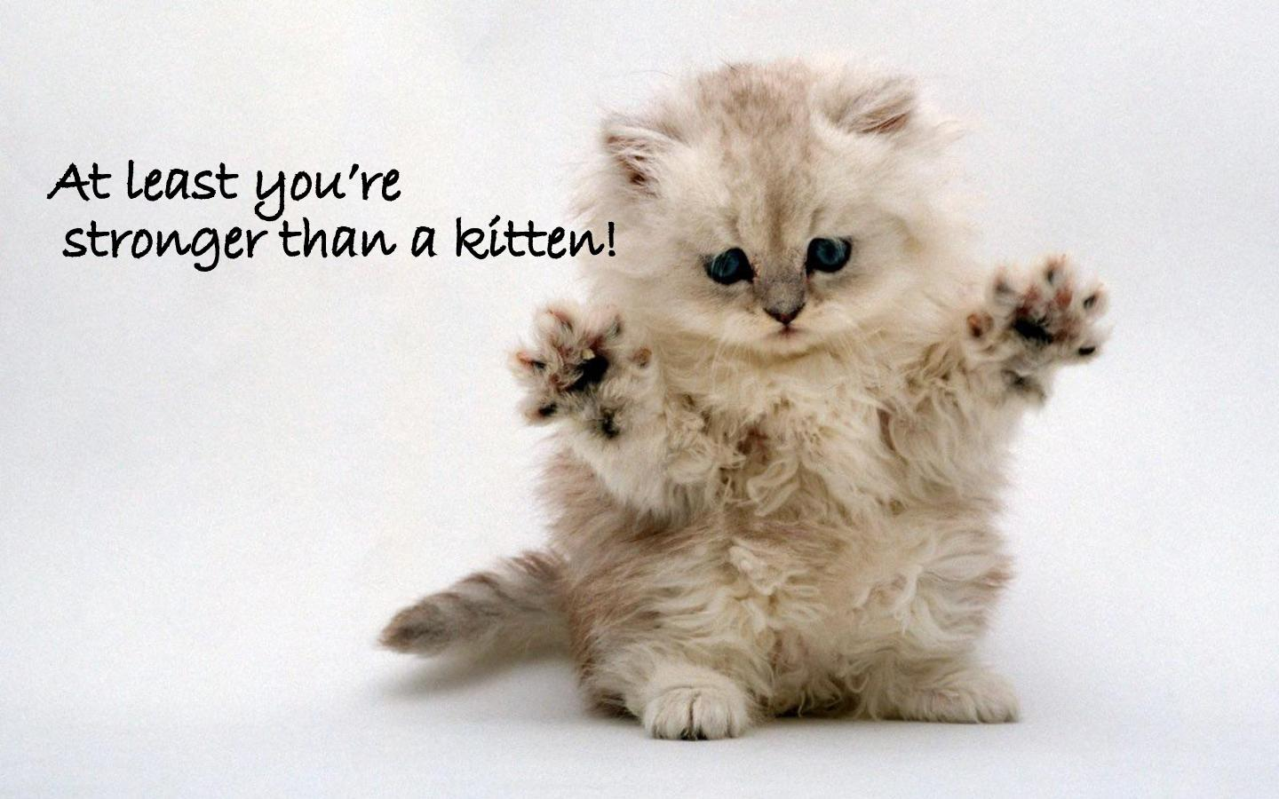 Kitten Sayings and Quotes ~ Best Quotes and Sayings