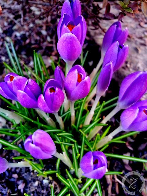 kwiatki na wiosne