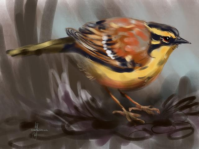 Siberian accentor bird painting by Artmagenta