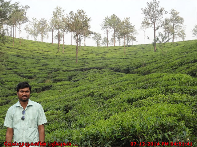 Tea Plantation tours in wayanad