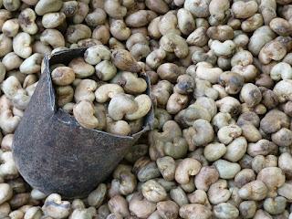 cashew-nut-cashew-roast-plant-nut-52064/
