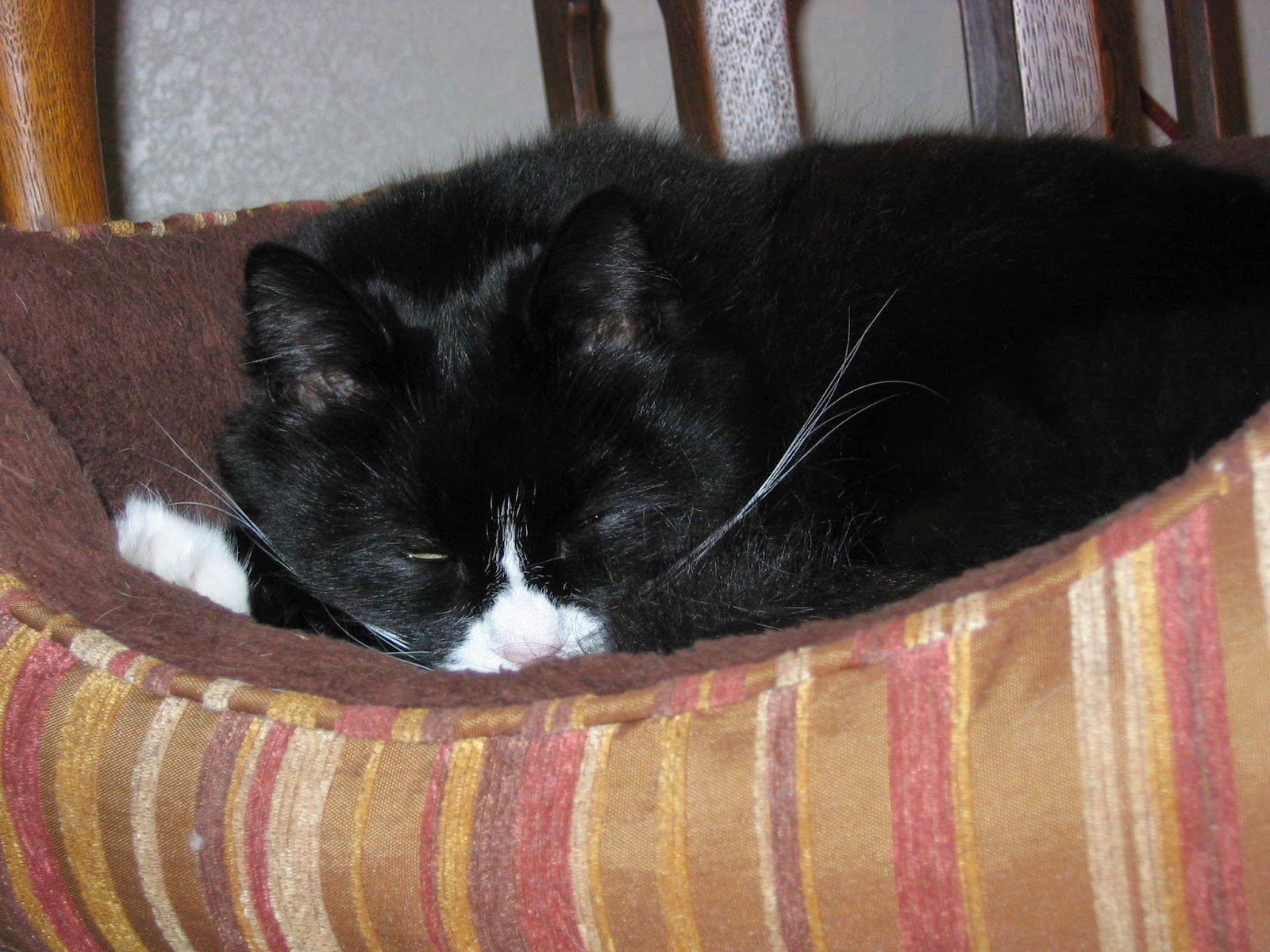 Maggie the cat in her bed