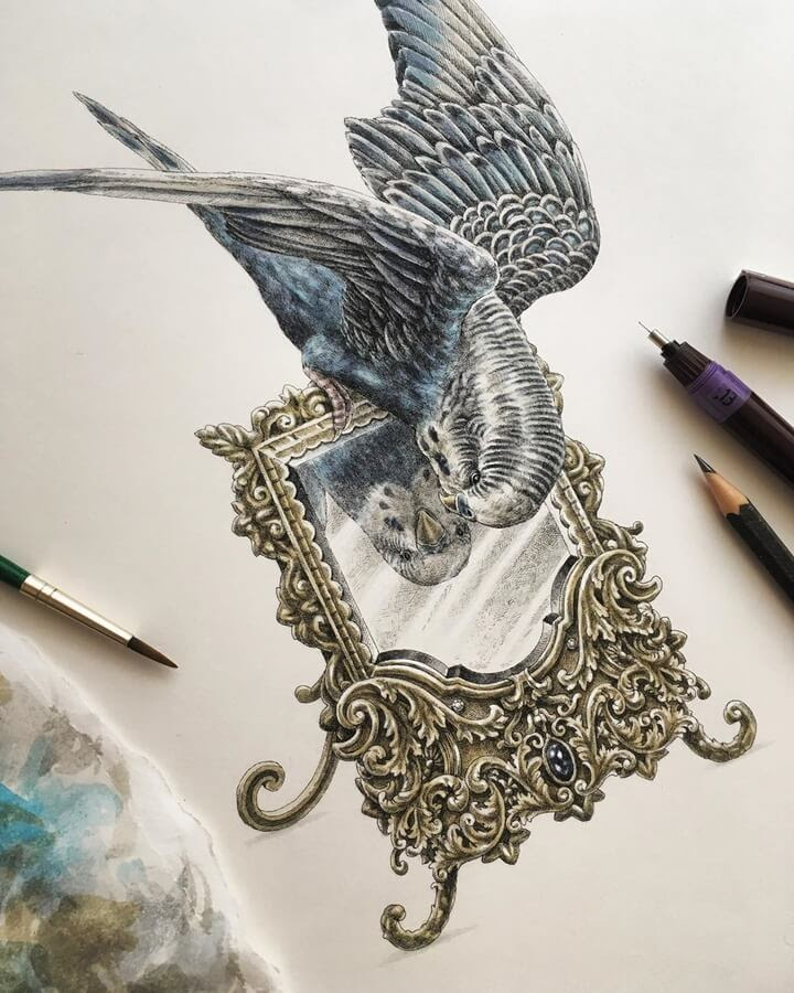 06-Parakeet-and-the-mirror-Steeven-Salvat-www-designstack-co