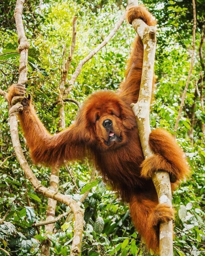 02-Dog-Orangutan-AOG-Fredriksen-Animal-Art-www-designstack-co