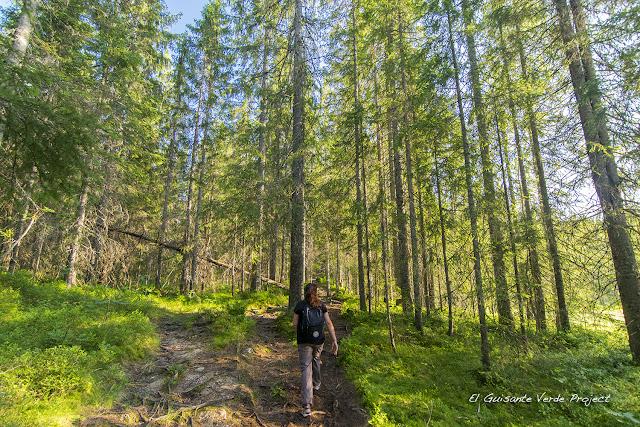 Senderos de Tryvannstua - Oslo por El Guisante Verde Project