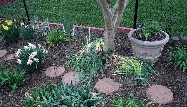 Daylily Blog - Gardening in Virginia