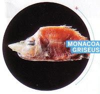 Monacoa Griseus