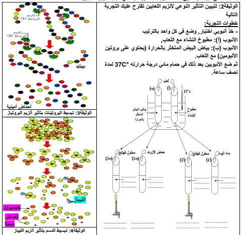 مذكرة تحويل الاغذية في الانبوب الهضمي للسنة الرابعة متوسط الاستاذ محمودي
