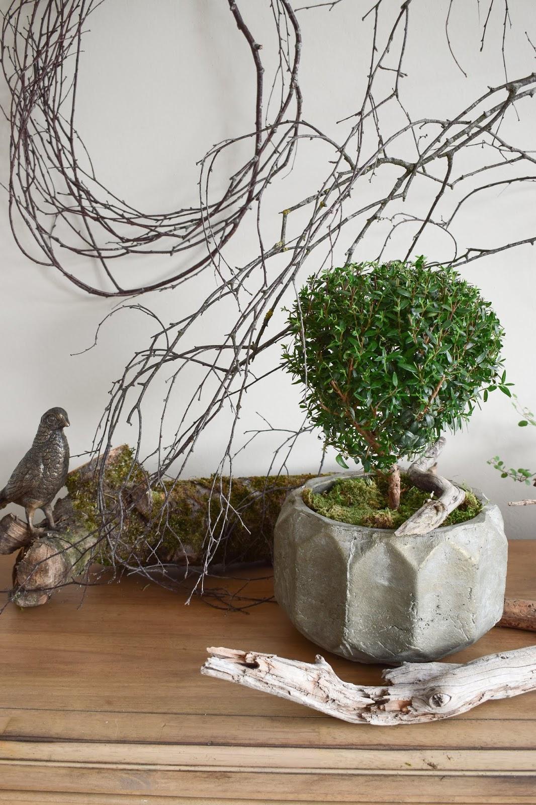 Naturdeko mit Topfpflanze: Verschönerung Übertopf Zimmerpflanze mit Moos Eukalyptus Schleierkraut. Myrte Dekoidee Deko Dekoration Übertopf natürlich dekorieren