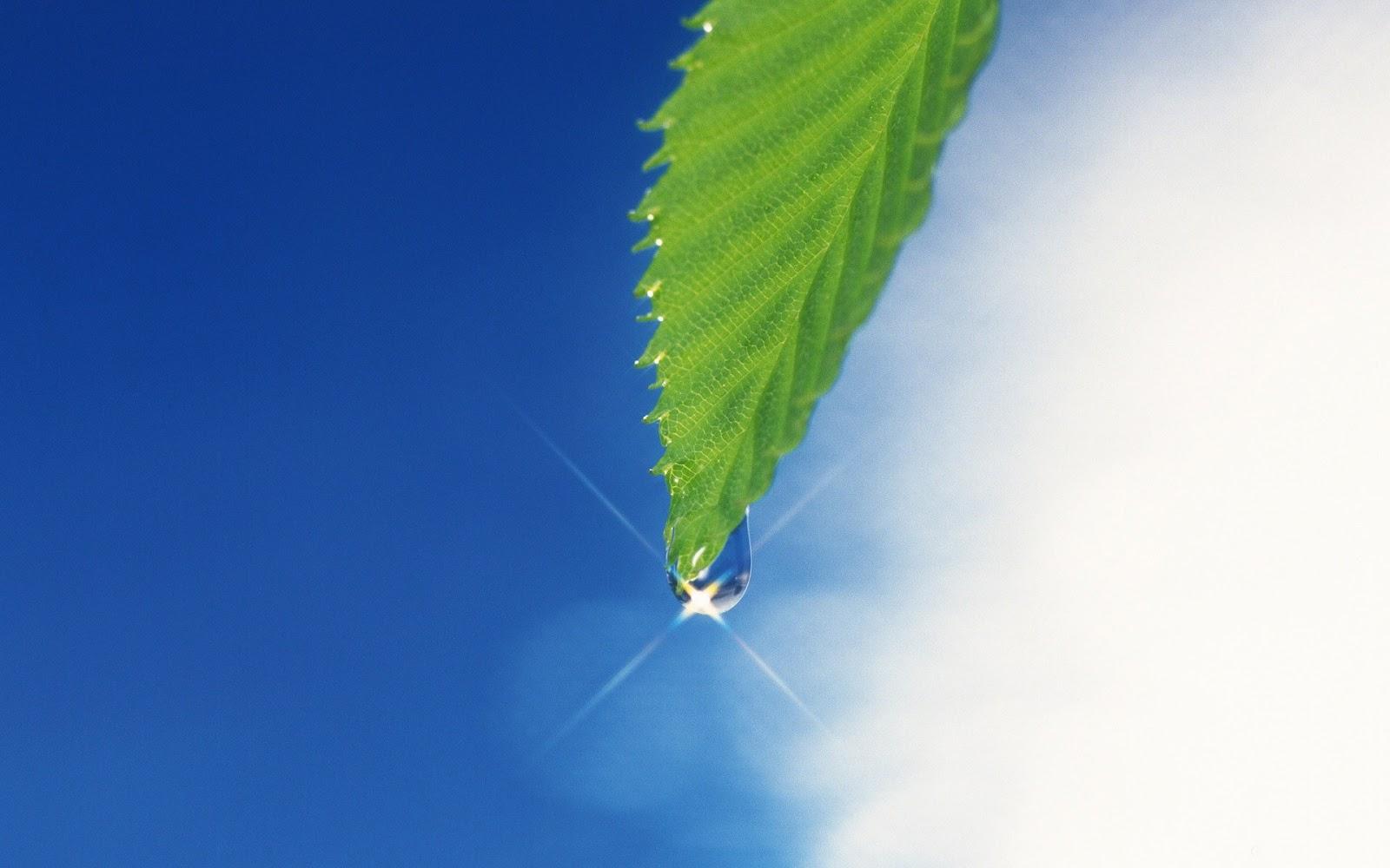 hình nền giọt sương đọng trên lá vào sáng sớm