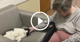 Stray Cat Wanders Into Nursing Home and Gets a Job