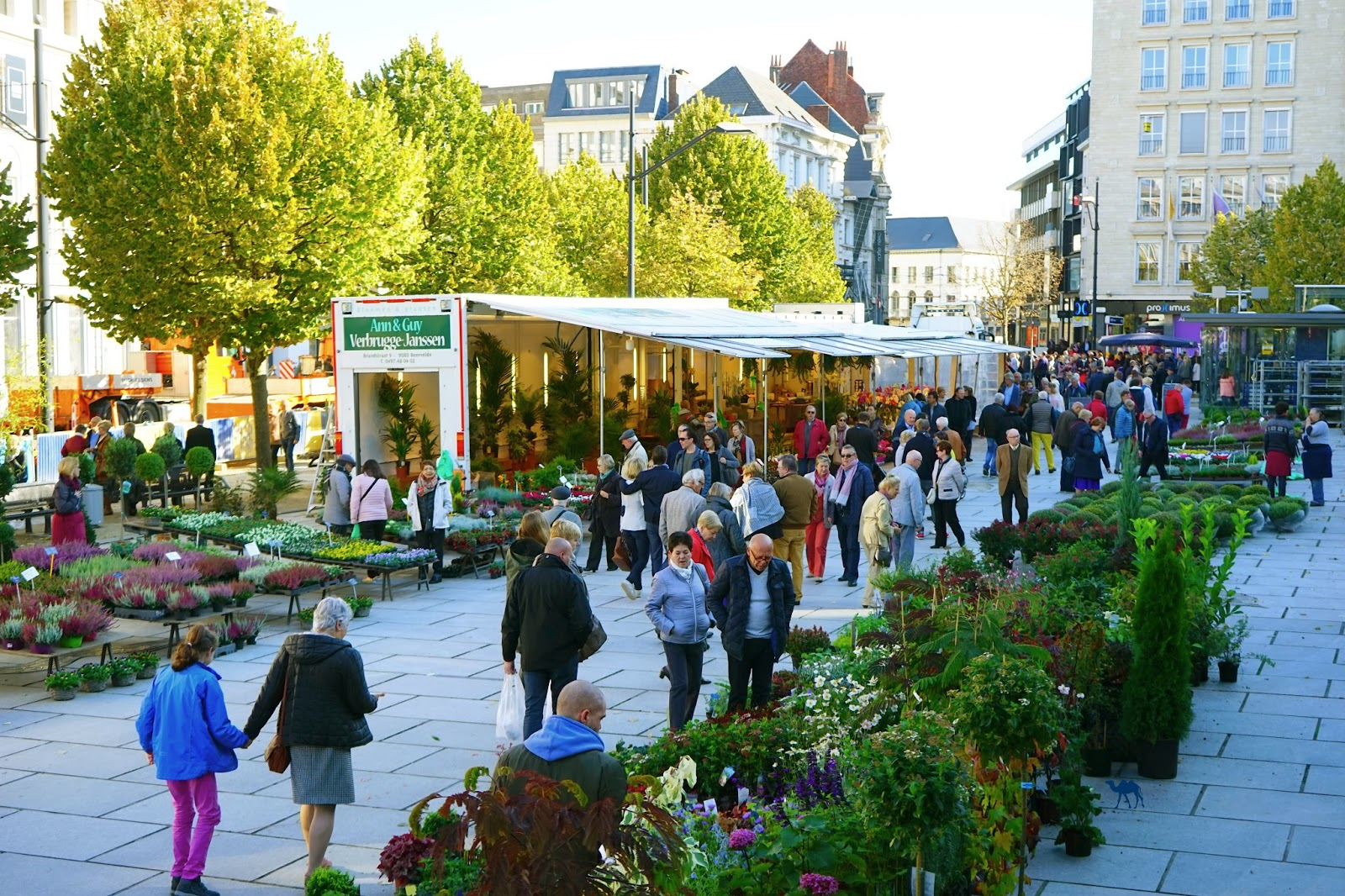 Le Chameau Bleu - Marché aux Fleurs de Gand Belgique Flandres Balges Ghent