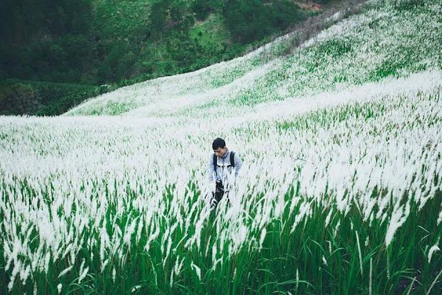 Du kích chụp ảnh cùng đồi cỏ tranh