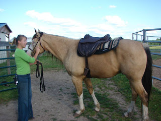 PSSM Horse Tack - Treeless Saddle Reviews