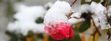 Προστατέψετε τα φυτά σας από το χειμώνα