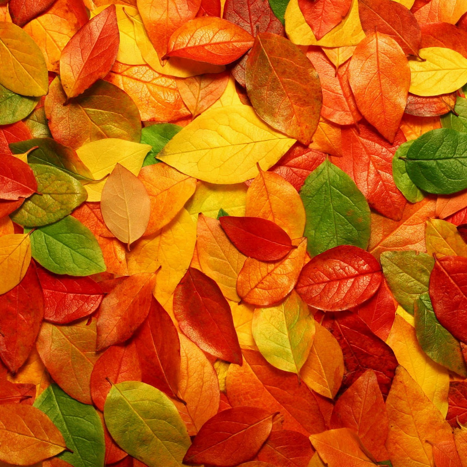 2048 X 2048 Autumn IPad 3 HD Wallpapers