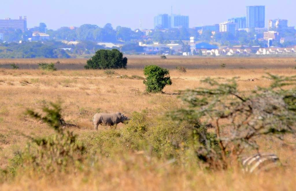 NAIROBI: STAD OP DE RAND VAN DE WILDERNIS