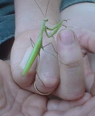 Mantis-friend