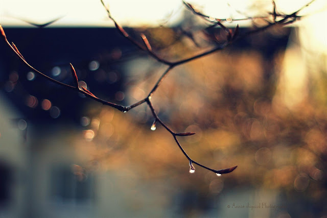 raindrops on branches