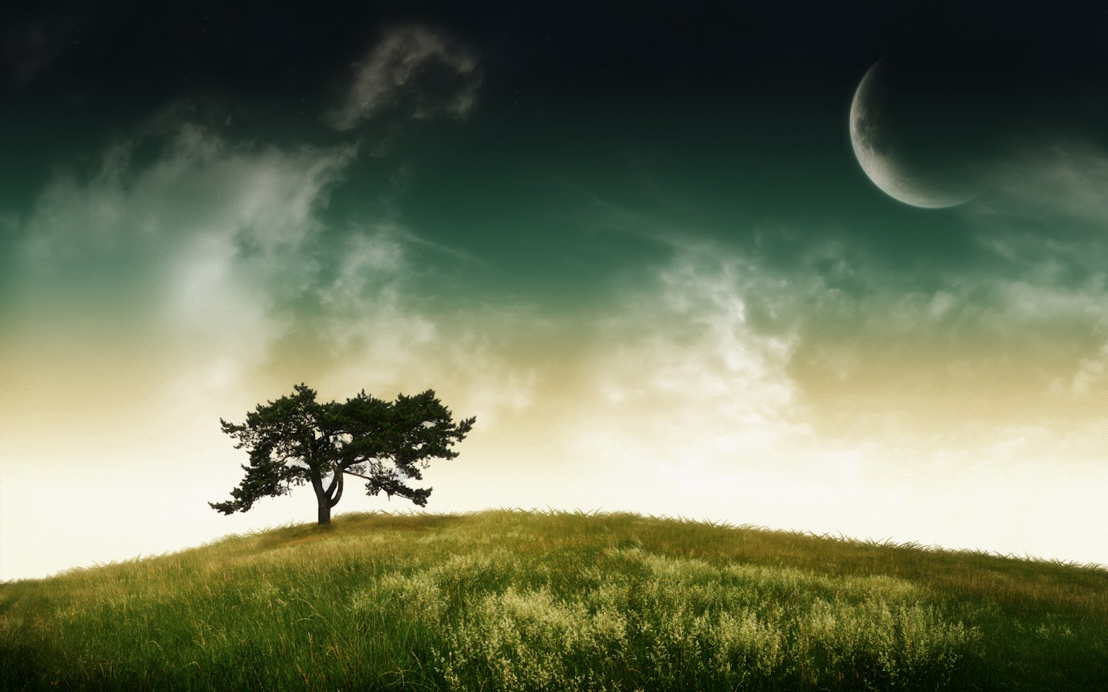 tree desktop background - photo #39
