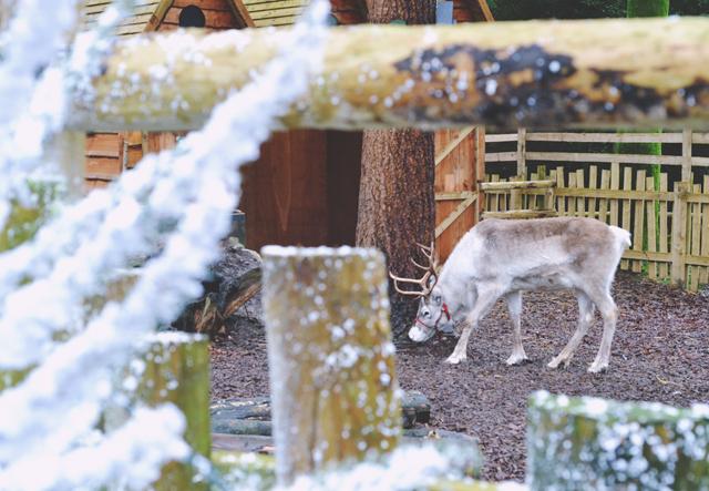 Feed Reindeer CenterParc