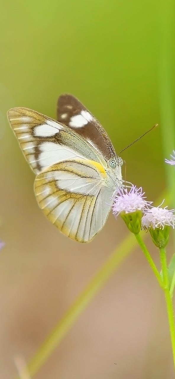 A beautiful butterfly on a flower.