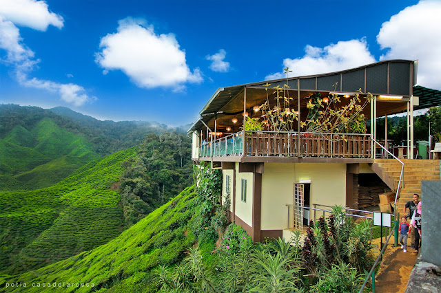Cameron Valley, Tea House (BOH Plantation), Cameron Highlands, Pahang