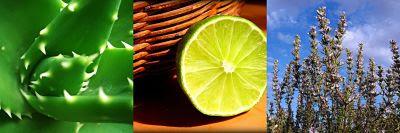Remedios naturales para picaduras de mosquitos, aliviar picaduras de mosquitos