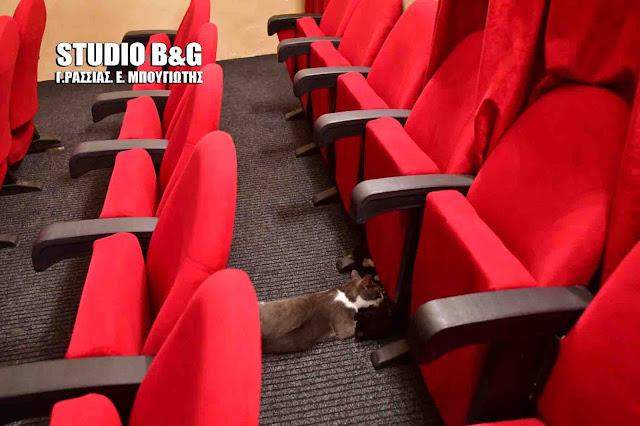 """""""Θεατρόφιλη"""" γάτα γέννησε μέσα σε αίθουσα θεάτρου στο Ναύπλιο"""