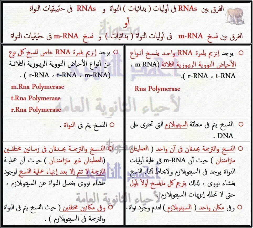 الفرق بين RNAs  فى أوليات ( بدائيات ) النواة  و   RNAs  فى حقييقيات النواة أو الفرق بين نسخ    m-RNA فى أوليات النواة ( بدائيات )  و  نسخ  m-RNA فى حقيقيات النواة - الثالث الثانوى