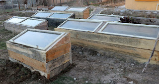 All of our raised beds