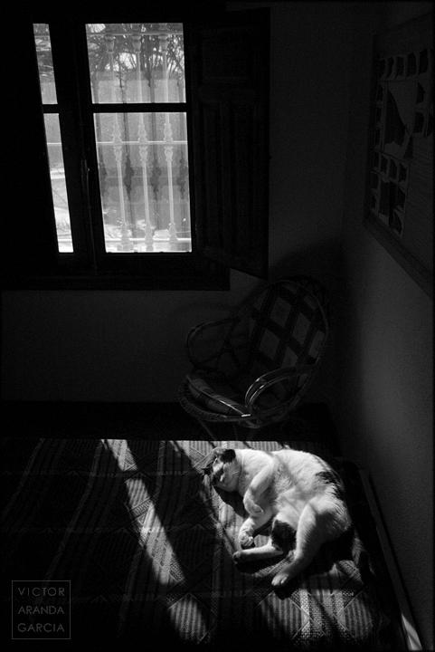 fotografia,gato,sol,ventana,interior,fuente_alamo,murcia