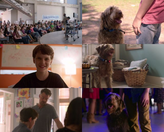 Think Like a Dog (2020) HD 1080p y 720p