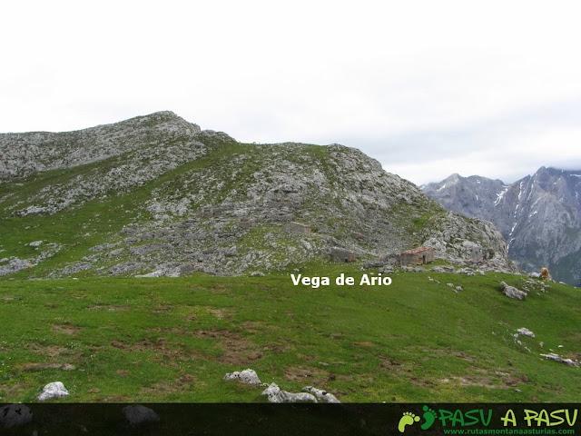Vega de Ario