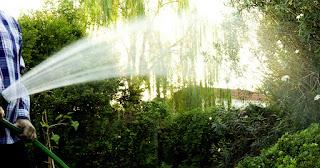 Se puede utilizar la orina como fertilizante? - 1