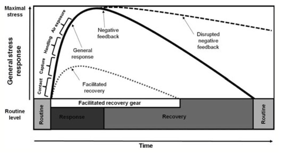 "an analysis of stress response Exploring the stress response: hpa axis, nutrition  the implication here is that ""burnout"" from a prolonged stress response and loss a deeper analysis."