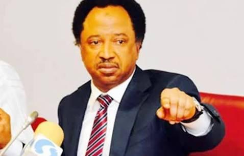 El-Rufai beats Shehu Sani? Kaduna APC Adopts Indirect Primary