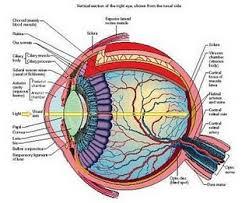 Cara Mengatasi Masalah Mata