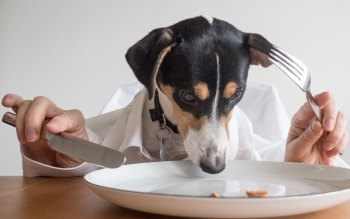 Wallpaper: Dog Taking Dinner