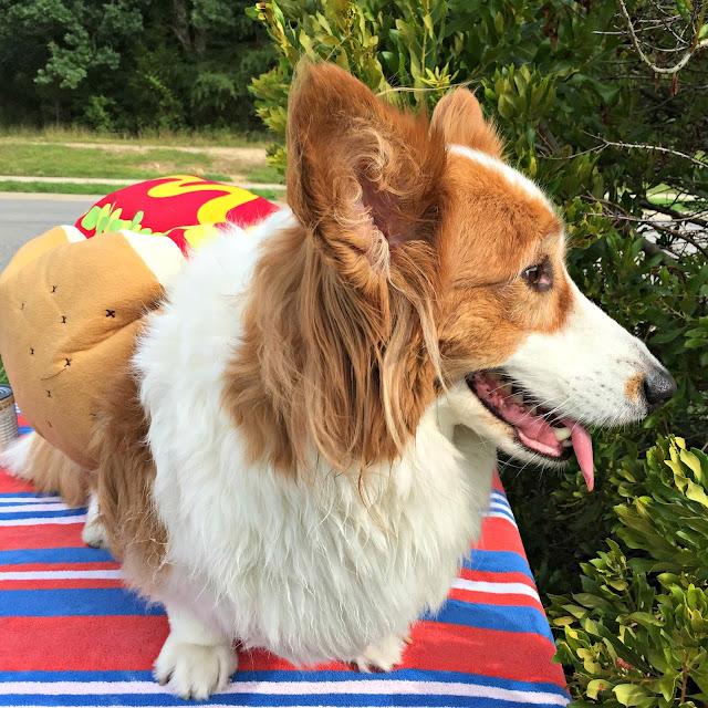 Merrick Dog Food Tripe