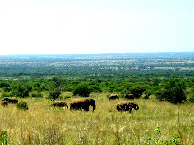 Kruger National Park, safari, South Africa, elephants